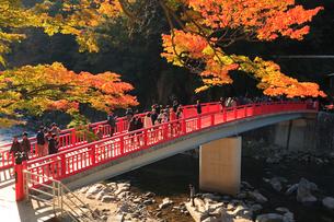 香嵐渓 巴川に待月橋と紅葉の写真素材 [FYI01798622]