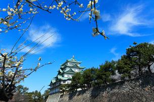 名古屋城天守閣とウメの写真素材 [FYI01798662]