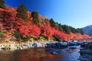 香嵐渓 巴川に待月橋と紅葉の写真素材 [FYI01798667]