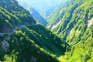 白山白川郷ホワイトロードに新緑の写真素材 [FYI01798675]