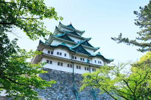 名古屋城天守閣と青空の写真素材 [FYI01798692]
