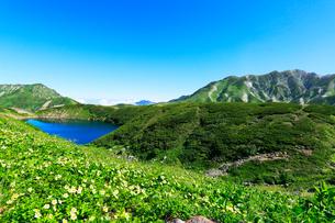 花咲く立山室堂平・ミクリガ池の写真素材 [FYI01798740]