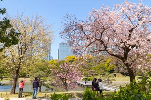浜離宮の桜の写真素材 [FYI01798757]