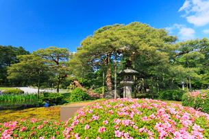 金沢兼六園・松に月見灯籠と花咲くツツジやカキツバタの写真素材 [FYI01798772]