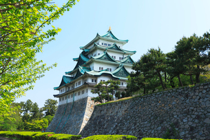 名古屋城天守閣と青空の写真素材 [FYI01798789]