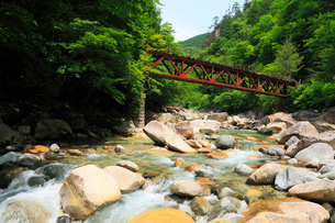 阿寺渓谷 緑の木々と清流に森林鉄道の写真素材 [FYI01798803]