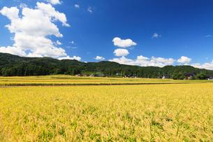 稲田と空に雲の写真素材 [FYI01798805]