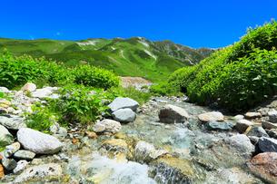 立山連峰と高山植物の花咲く清流の写真素材 [FYI01798812]
