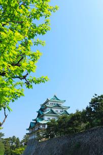 名古屋城天守閣と青空の写真素材 [FYI01798824]