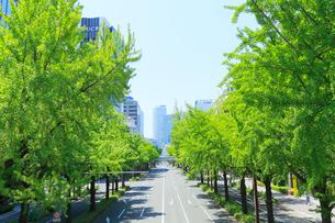 桜通・名古屋駅方向の高層ビルと新緑のイチョウ並木の写真素材 [FYI01798860]