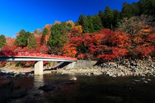 香嵐渓 巴川に待月橋と紅葉の写真素材 [FYI01798983]