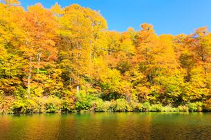 紅葉の木立と池の写真素材 [FYI01798999]