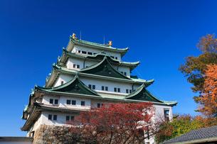 秋の名古屋城・天守閣と紅葉の写真素材 [FYI01799001]