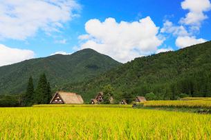 秋の白川郷・稲田と青空の写真素材 [FYI01799022]