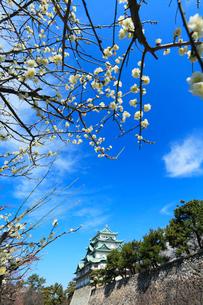 名古屋城天守閣とウメの写真素材 [FYI01799028]