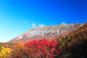 秋の鍵掛峠より望む大山と紅葉の写真素材 [FYI01799053]