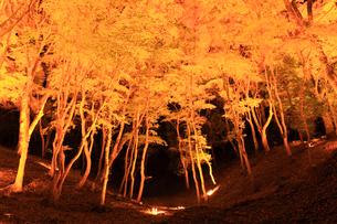 香嵐渓 紅葉ライトアップ夜景の写真素材 [FYI01799065]