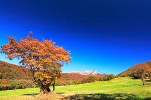 快晴の奥大山スキー場より大山と紅葉の写真素材 [FYI01799083]