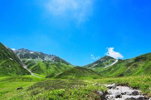 高山植物の花咲く夏の立山の写真素材 [FYI01799155]