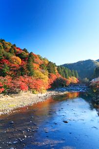 香嵐渓 巴川に待月橋と紅葉の写真素材 [FYI01799188]