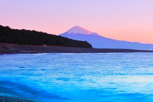 三保の松原より望む朝焼けの富士山の写真素材 [FYI01799204]