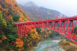 秋の黒部峡谷鉄道・トロッコ電車と紅葉に霧の写真素材 [FYI01799209]