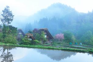 白川郷に朝霧の写真素材 [FYI01799257]