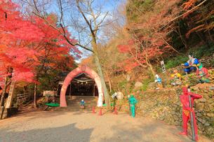 桃太郎神社の写真素材 [FYI01799260]