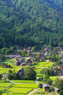 夏の白川郷・城山展望台より望むの写真素材 [FYI01799262]