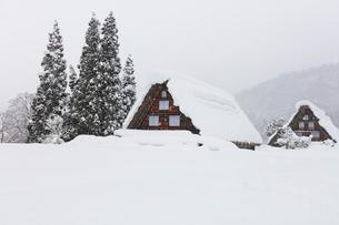 冬の白川郷・合掌造り集落に降雪の写真素材 [FYI01799288]