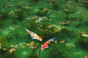 モネが描いた絵のような池の写真素材 [FYI01799293]