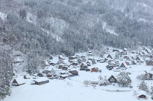 冬の白川郷・城山展望台より望む合掌造り集落の写真素材 [FYI01799294]