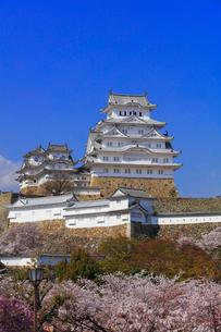 姫路城とサクラの写真素材 [FYI01799329]