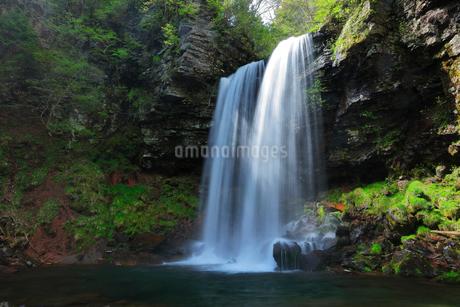 夫婦滝と新緑の写真素材 [FYI01799330]
