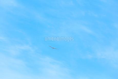 空にグライダーの写真素材 [FYI01799337]
