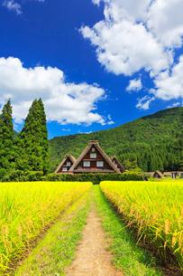 秋の白川郷・合掌造り集落と稲田の写真素材 [FYI01799338]