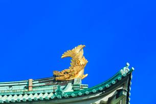 名古屋城天守閣 金鯱の写真素材 [FYI01799401]