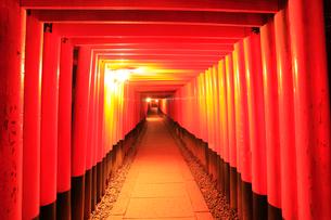京都・伏見稲荷大社千本鳥居の夜景の写真素材 [FYI01799404]