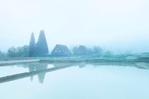 白川郷に朝霧の写真素材 [FYI01799452]