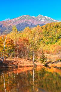 秋の乗鞍高原・まいめの池より乗鞍岳と紅葉の写真素材 [FYI01799500]