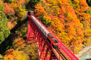 秋の黒部峡谷鉄道・トロッコ電車と紅葉の写真素材 [FYI01799516]