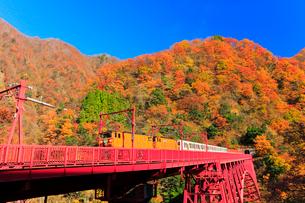 秋の黒部峡谷鉄道・快晴の空にトロッコ電車と紅葉の写真素材 [FYI01799560]