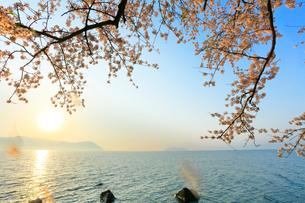 海津大崎の桜 琵琶湖に竹生島と朝日の写真素材 [FYI01799593]