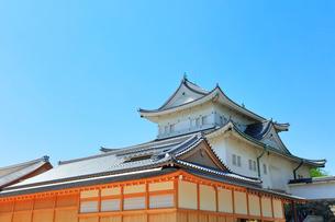 名古屋城の写真素材 [FYI01799639]