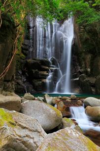 桑の木の滝の写真素材 [FYI01799683]