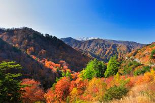 秋の白山白川郷ホワイトロードに紅葉と冠雪の白山の写真素材 [FYI01799690]