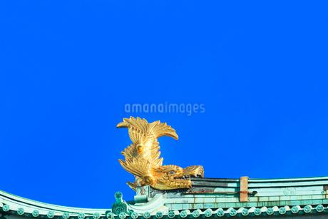 名古屋城天守閣 金鯱の写真素材 [FYI01799701]