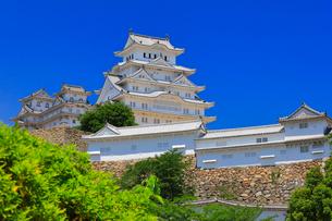 快晴の空と姫路城に緑の木立の写真素材 [FYI01799752]