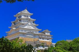 姫路城に快晴の空と緑の木立の写真素材 [FYI01799768]