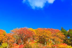 紅葉の木立と青空の写真素材 [FYI01799777]
